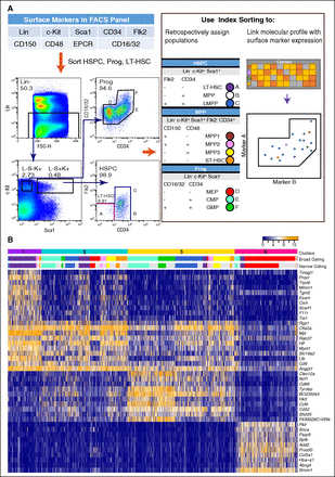 A single-cell resolution map of mouse hematopoietic stem and progenitor cell differentiation