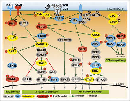 Activating mutations in genes related to TCR signaling in angioimmunoblastic