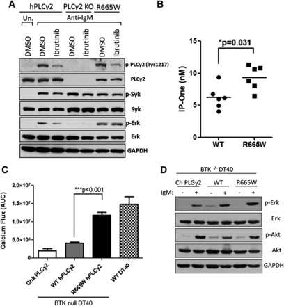 Hypermorphic mutation of phospholipase C, CLL confers BTK independency upon B-cell receptor activation
