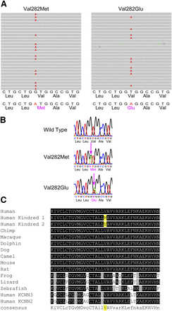 Mutations in the Gardos channel (KCNN4) are associated with hereditary xerocytosis