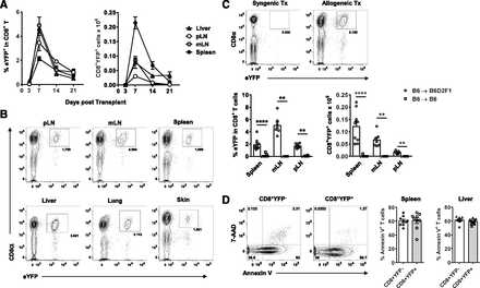 Tc17 cells are a proinflammatory, plastic lineage of pathogenic CD8+ T cells that induce GVHD without antileukemic effects