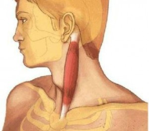 The reasons for the development, manifestations and therapy of cervical dystonia