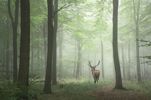 Deer can infect people with a fatal illness