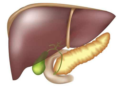 Diagnosis of liver necrosis