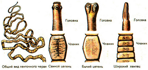 Evidence for the presence of worms in the body