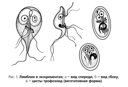 How do you get giardiasis