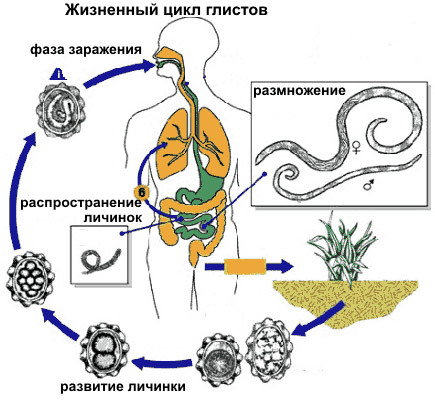 Signs of parasites in the human body