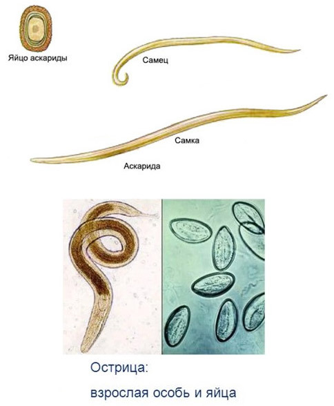 Signs of worms