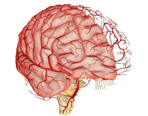 Drugs for cleaning the blood vessels of the brain