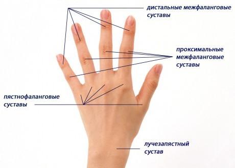 sustavi-kisti-cheloveka