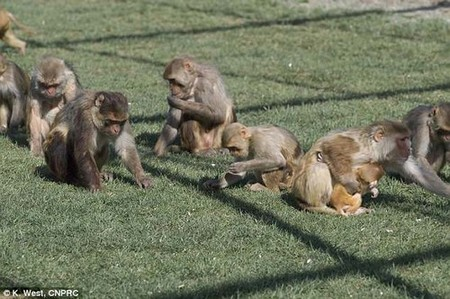 A new study shows that rhesus macaques with low sociability also had low levels of the peptide vasopressin, a hormone, in cerebrospinal fluid, as did children with autism spectrum disorder