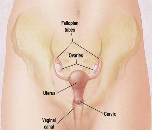Cervical Cancer, Screening, Prevention and Vaccination