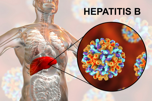 Diagnosis of hepatitis B, during pregnancy