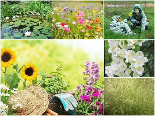 Tips for allergy sufferers who work in the garden