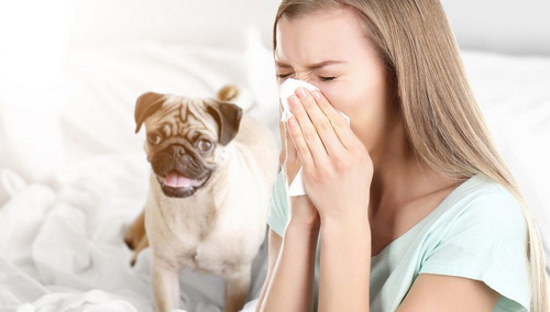 Allergy, on dogs