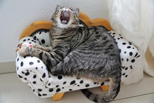 Breathe until you feel like yawning