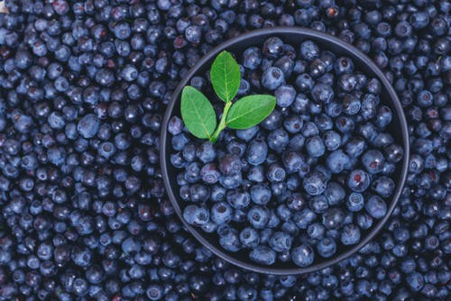 Myth: Blueberries and carrots improve vision. Image number 3