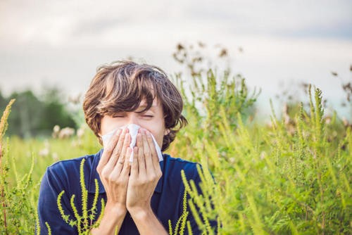 How to survive the spring: 20 tips for allergies. Image number 7
