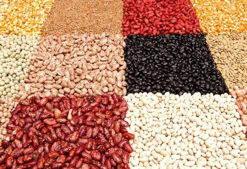 There are many types of legumes.