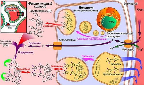 Biosynthesis process