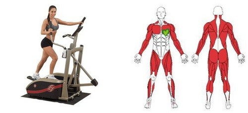 What muscle groups work