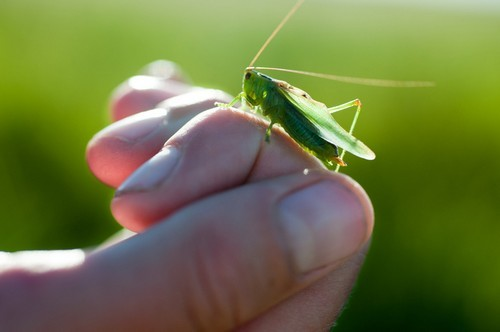 Why are kids cruel to insects?