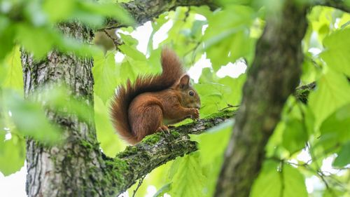 Squirrel In Morrison Tests Positive For Bubonic Plague